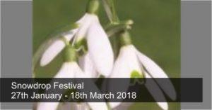 Snowdrop Festival