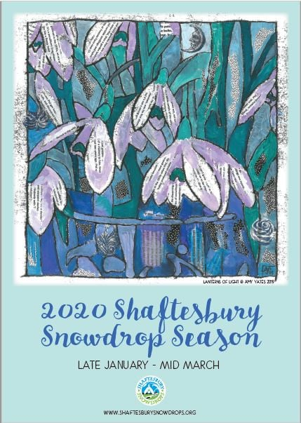 Shaftesbury snowdrop season 2020