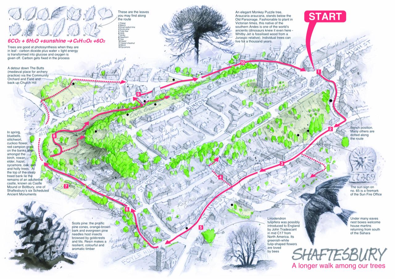 Shaftesbury: a long walk among our landmark trees
