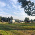 Mayor Farm camping